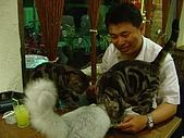 藝術雅集:三貓爭食