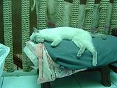 藝術雅集:還在睡...