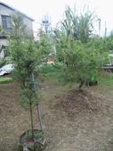 南投鹿谷盆栽展示:IMG_9324.JPG