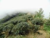 雲林古坑華山到二尖大尖山路景色:IMG_4525.JPG