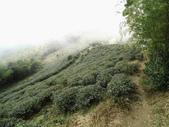 雲林古坑華山到二尖大尖山路景色:IMG_4526.JPG
