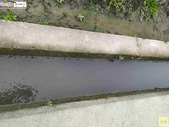 林內濁水溪四季豆:42588印.jpg
