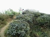 雲林古坑華山到二尖大尖山路景色:IMG_4520.JPG