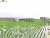 林內濁水溪四季豆:42580印.jpg