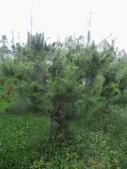 南投鹿谷盆栽展示:IMG_9329.JPG
