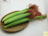 紅鬚玉米筍-安全用藥(台灣農產行銷網-台灣阿榮):IMG_2971用印.jpg