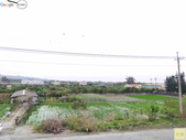 林內濁水溪四季豆:42576印.jpg