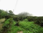 雲林古坑華山到二尖大尖山路景色:IMG_4502.JPG