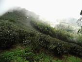 雲林古坑華山到二尖大尖山路景色:IMG_4509.JPG