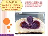 水果蔬菜專賣食譜:SWPOTATOPURPLEsweet4.JPG