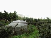雲林古坑華山到二尖大尖山路景色:IMG_4515.JPG