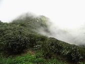 雲林古坑華山到二尖大尖山路景色:IMG_4505.JPG