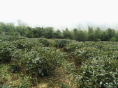 雲林古坑華山到二尖大尖山路景色:IMG_4524.JPG