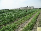 紅鬚玉米筍-安全用藥(台灣農產行銷網-台灣阿榮):IMG_2579印.jpg