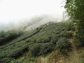 雲林古坑華山到二尖大尖山路景色:IMG_4528.JPG