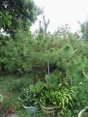 南投鹿谷盆栽展示:IMG_9318.JPG