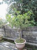 南投鹿谷盆栽展示:IMG_9320.JPG