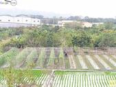 林內濁水溪四季豆:42573印.jpg