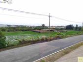 林內濁水溪四季豆:42566印.jpg
