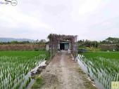 林內濁水溪四季豆:42561印.jpg