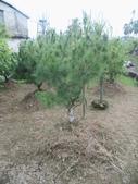 南投鹿谷盆栽展示:IMG_9322.JPG
