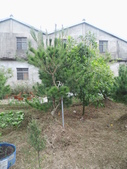 南投鹿谷盆栽展示:IMG_9323.JPG