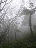 浸水營古道:20060101 038