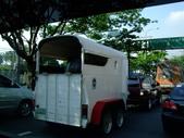 菲律賓之旅07-10:1297514600.jpg