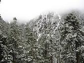 2008玉山冬雪:IMG_4256.jpg