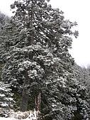 2008玉山冬雪:IMG_4257.jpg