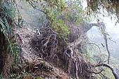 1119-22南湖大山:DSC_0039.JPG