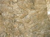 971026苗栗野外:生痕化石.JPG