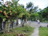 花花草草:DSC01896.JPG