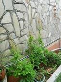 綠牆-防曬降溫免吹冷氣:紫藤8.jpg