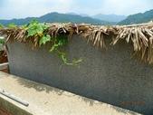 綠牆-防曬降溫免吹冷氣:絲瓜1.jpg