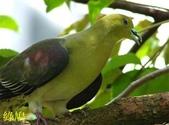 花鳥照:鳥17.jpg