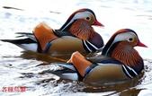 格照語法1:各種鳥顲13.jpg