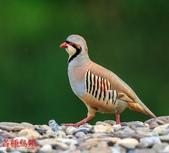 格照語法1:各種鳥顲14.jpg