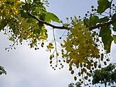 標頭照:黃金瀑布5.jpg