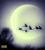 花鳥照:鳥2.jpg