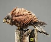 花鳥照:鳥7.jpg