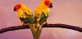 天鵝:美鳥2.jpg