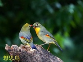 花鳥照:鳥21.jpg