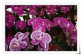 花花世界:蘭花1.JPG