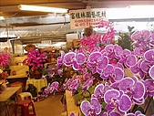 花花世界:蘭花2.JPG