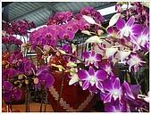 花花世界:蘭花6.JPG