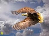 花鳥照:鳥8.jpg