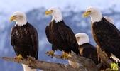 花鳥照:鳥11.jpg