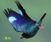 文語法1:三寶鳥2.jpg