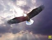 花鳥照:鳥9.jpg